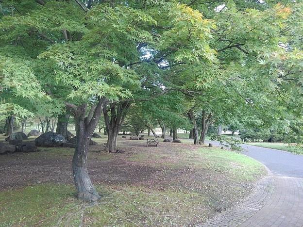 モミジの散歩が楽しめそうな道(9月10日)
