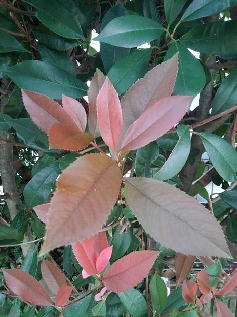 赤と緑の葉(9月17日)