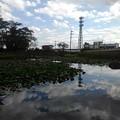 美しい映り込みが楽しめる長峰公園の池(9月10日)