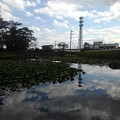 Photos: 美しい映り込みが楽しめる長峰公園の池(9月10日)