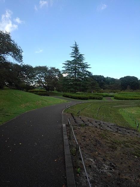 長峰公園の奥に木が見える歩道(9月10日)