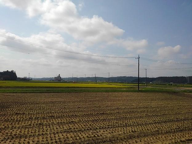 Photos: 水田(9月15日)