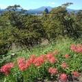 長峰公園の丘のヒガンバナと奥に見える山(9月19日)