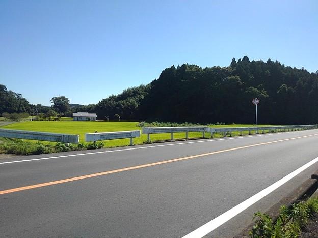 道路と水田(9月20日)