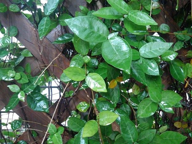 格子状の壁と小さな葉(9月18日)