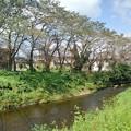 Photos: 歩道からの川(9月15日)