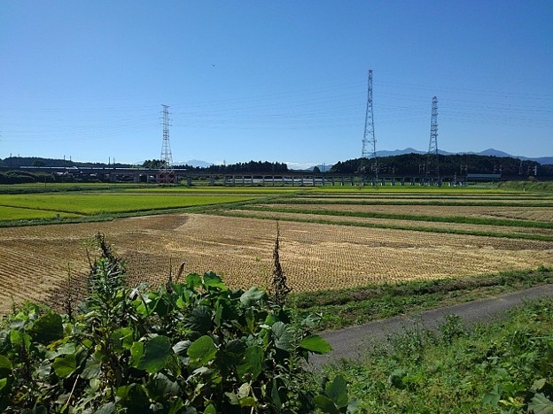 Photos: 稲刈り後の水田(9月20日)