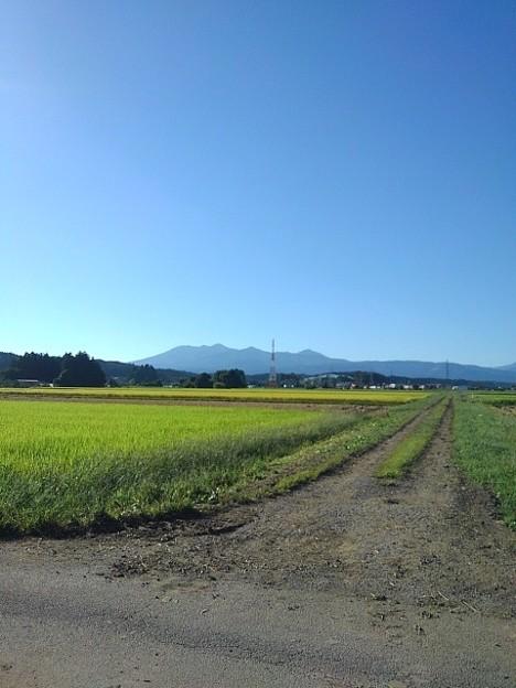 山と水田(9月20日)