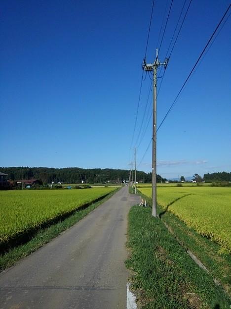 水田沿いの道路(9月20日)