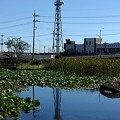 長峰公園の池の映り込み(9月19日)