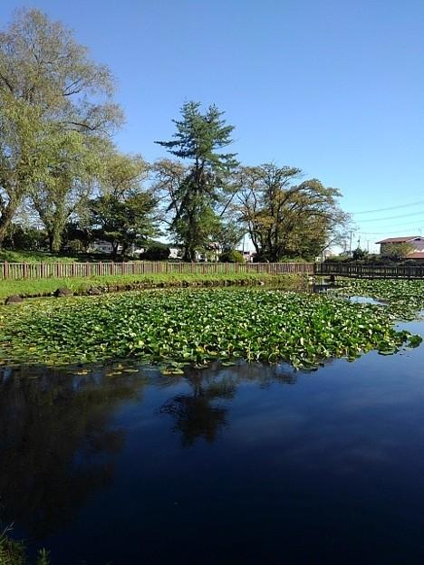 長峰公園の青く染まる池(9月19日)