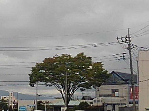 街路樹(9月25日)