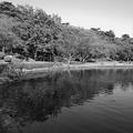 烏ヶ森公園の池の映り込み・モノクロVer.(10月3日)