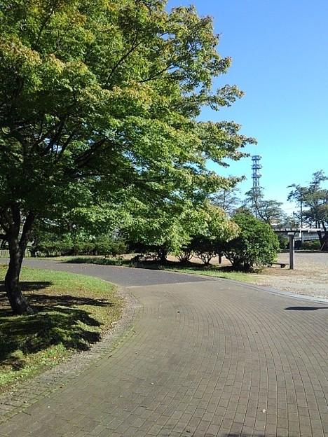 長峰公園のモミジの散歩道(9月19日)