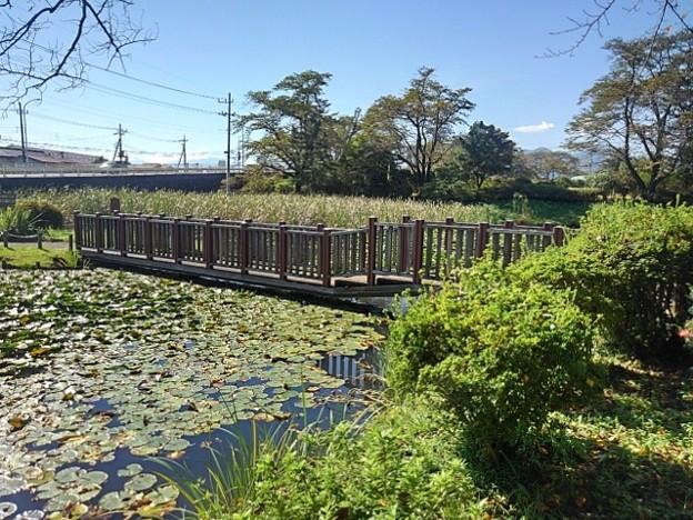 長峰公園の池の橋(9月19日)