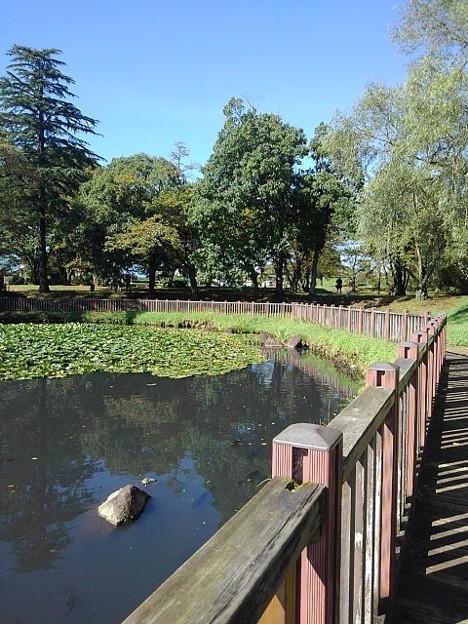 長峰公園の池の岸辺の道からの景色(9月19日)