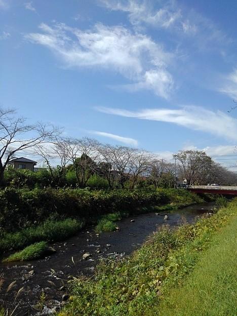 晴れた日の川(10月11日)