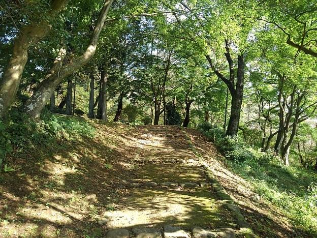 烏ヶ森公園の丘のモミジもある道(10月3日)