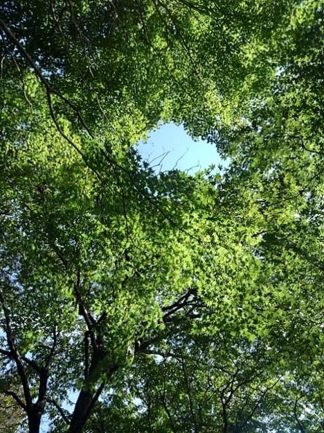 烏ヶ森公園の丘のモミジの天井(10月3日)