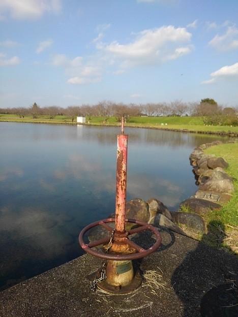 ゆうゆうパークの池の水門(10月15日)