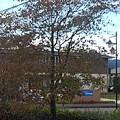 小さな公園の植木(10月17日)