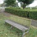 小さな公園のベンチと奥のイチョウ(10月17日)