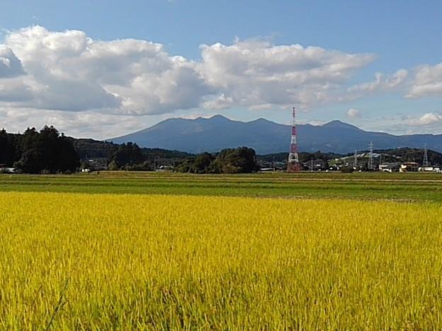 山と水田(10月24日)