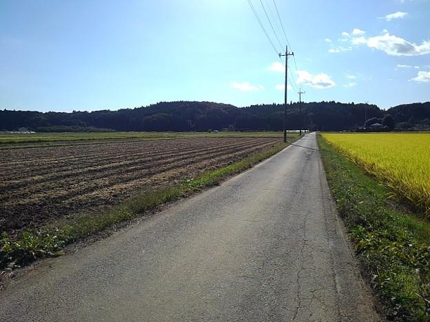 水田地帯の道路(10月24日)