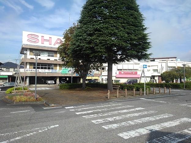 矢板駅前の大きな木(10月8日)