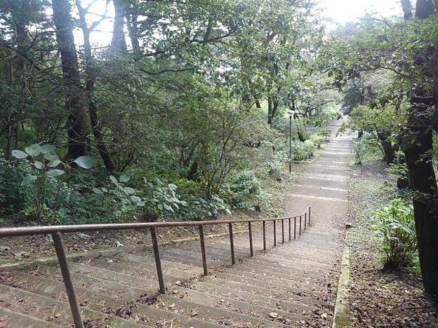 烏ヶ森公園の丘の下り階段(10月3日)