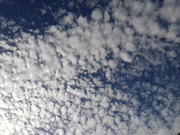 目が細かい鱗雲(10月17日)