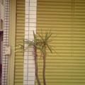 Photos: 観葉植物