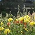 空き地に咲いたー並んで咲いたー