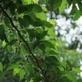 雨の日の緑ー瑞々しくー