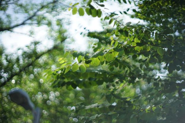 緑満開ー美しくー