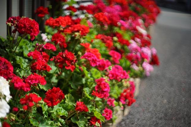 赤いお花ー情熱色ー