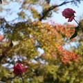Photos: 強羅公園