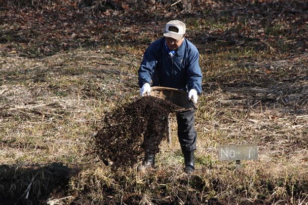 落ち葉の堆肥を
