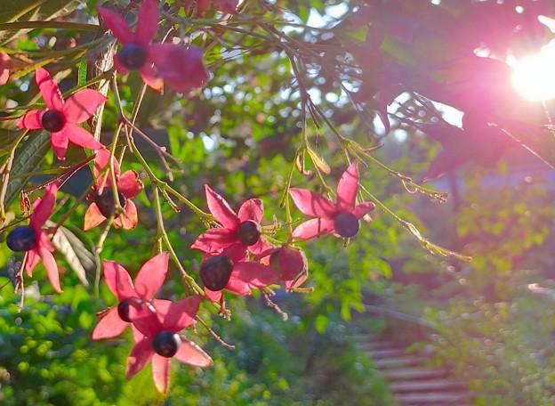 Photos: 夕日が
