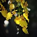 Photos: 秋雨が