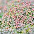 Photos: 珊瑚