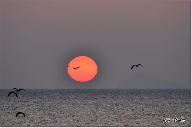 夜明けの飛翔