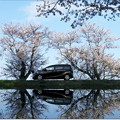 Photos: SAKURA Reflection