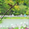 Photos: お花見