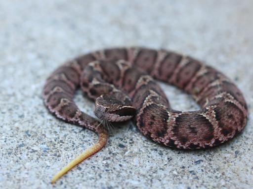 散歩途中のヘビ-02