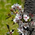 花から若葉へ