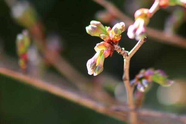 小さい春~♪
