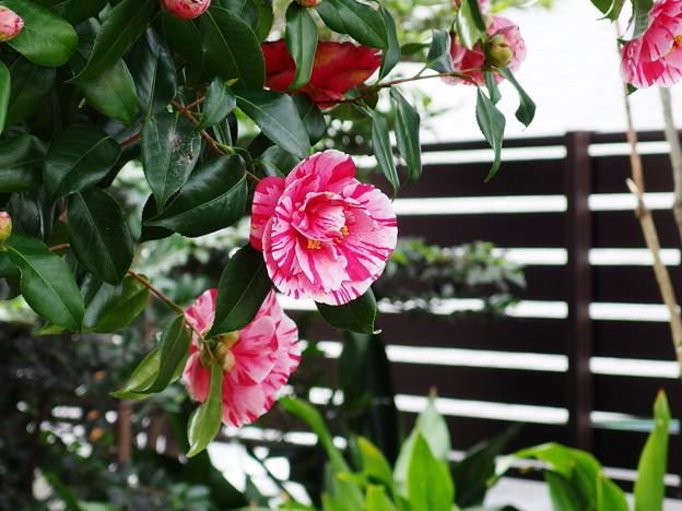 庭の春 2