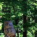 Photos: 森に夢見る~♪