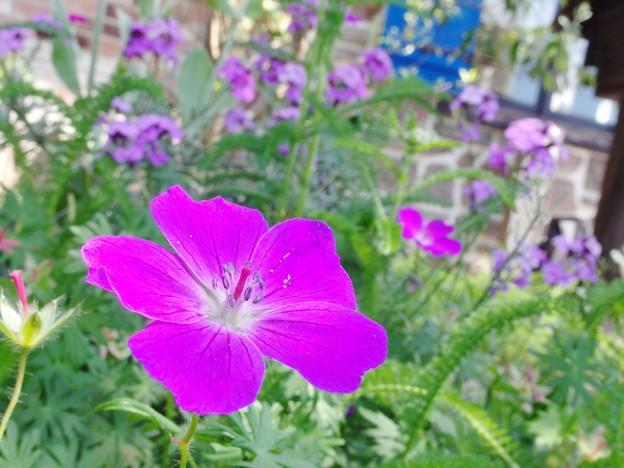 6月の花壇に